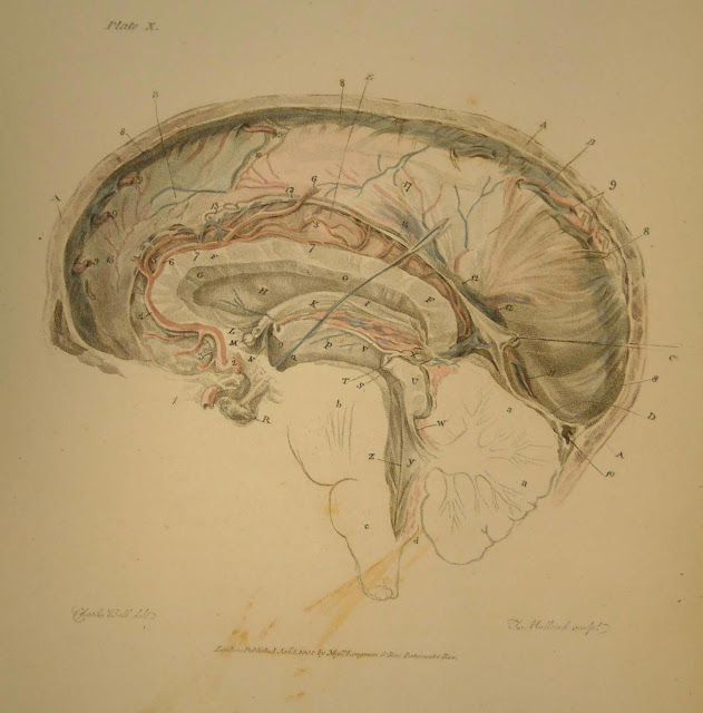 Brain Anatomical5
