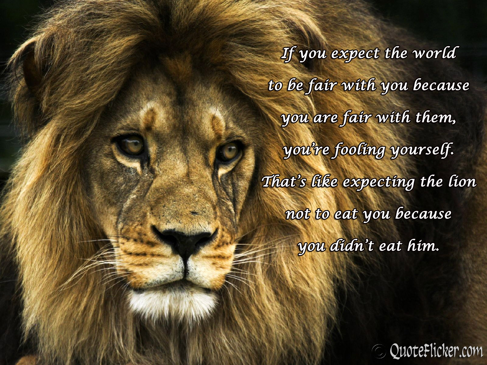 Beautiful Lion Quotes