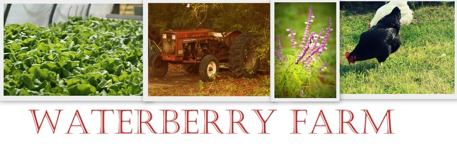 waterberry farm