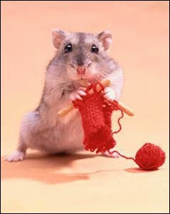The Knitting Hamster