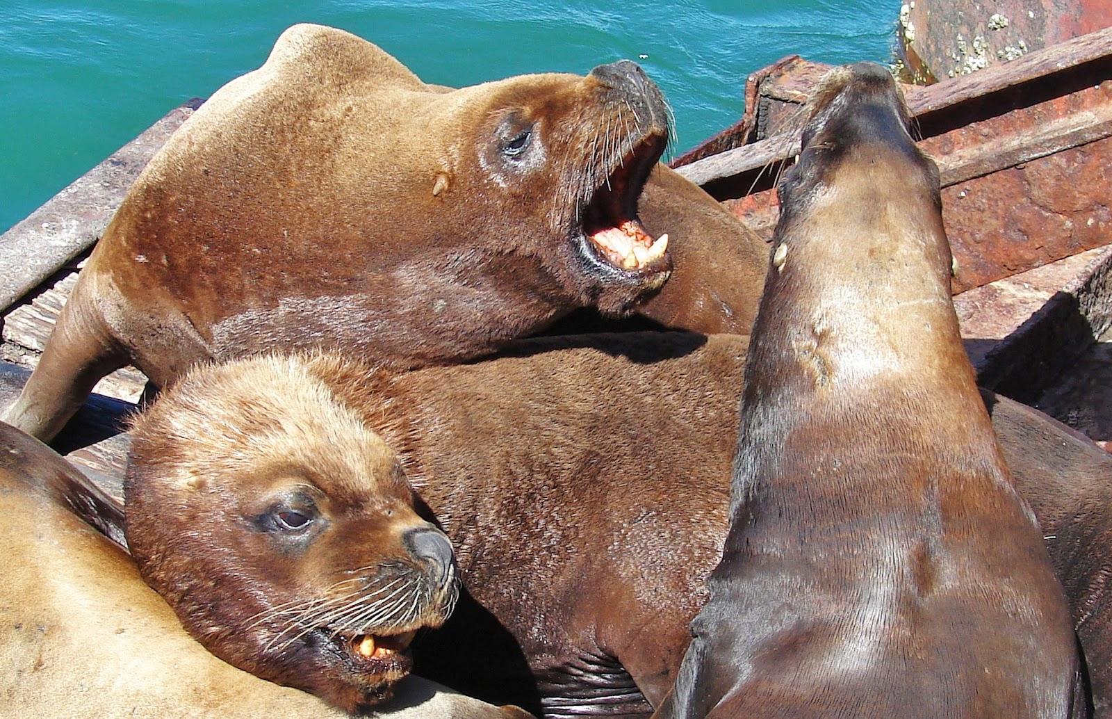 Animales Que Respiran Por La Piel