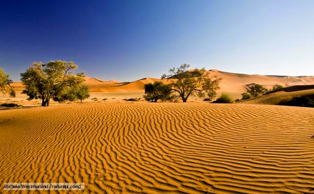 essay on desert biome Biomes climatograph: description of desert: desert biomes are the driest of all biomes the most important characteristic of the desert biome is that.