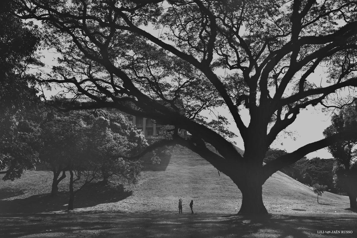 El viejo árbol en el Canal, Edificio de la Administración.