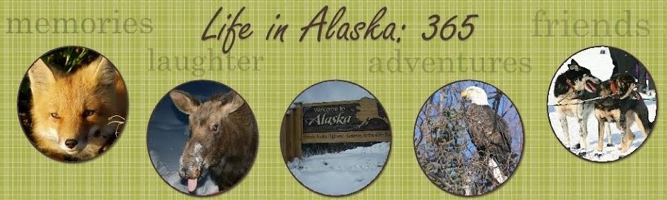 Life in Alaska 365