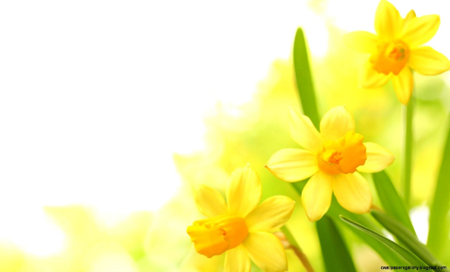 yellow flowers wallpapers