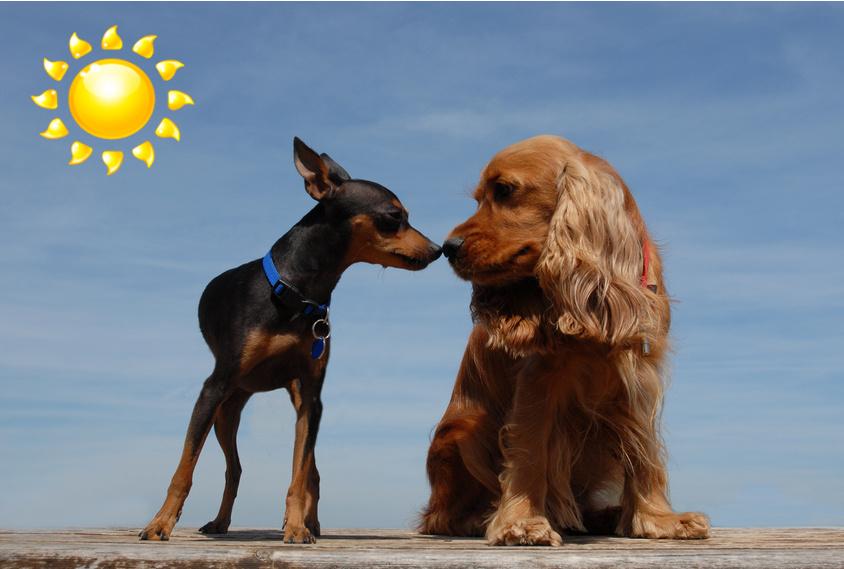 Toilettage sunshine pour chiens et chats rive sud de for Salon de toilettage montreal