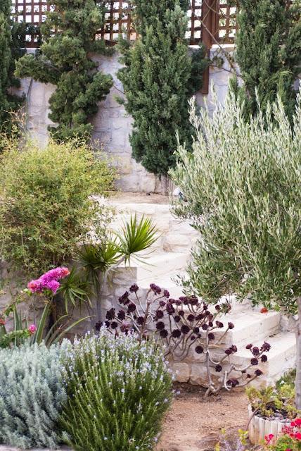 многолетние травы отлично приживаются в засушливом климате