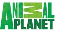 setcast Animal Planet Live Streaming
