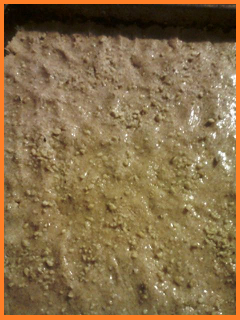 pressed dough glistens due to the egg white/water mixture.  Crushed nuts on top