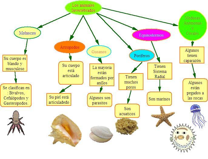 Animales Invertebrados Picture.