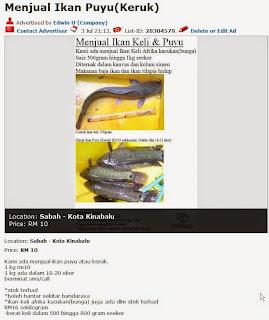 ikan keli afrika,ikan puyu,gambar ikan keli,ikan kerul,ikan lele,bibit ikan