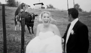 funny picture of  wedding: cows fucking in the background!