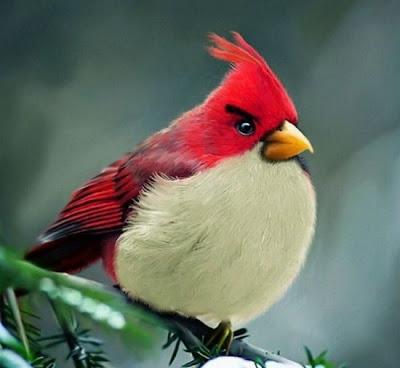 صور الطيور الحقيقية للعبة-منتهى