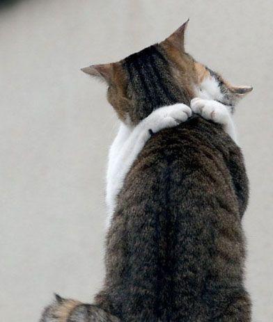 Mơ thấy ôm người yêu đơn phương & chúc hạnh phúc