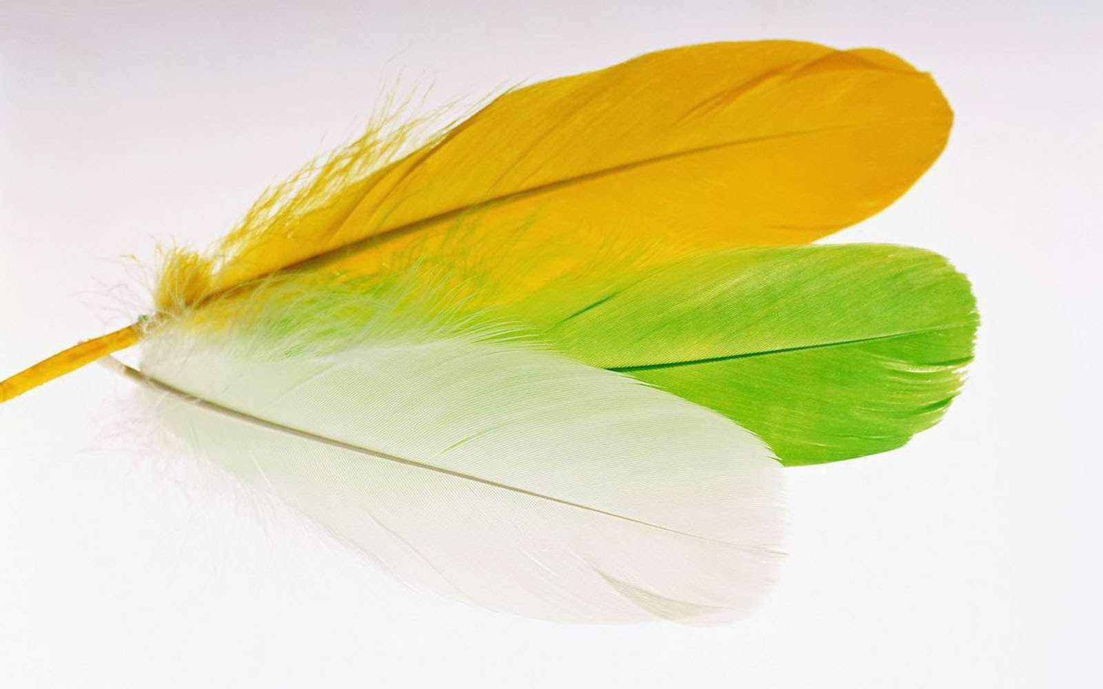wallpaper feather download - photo #40