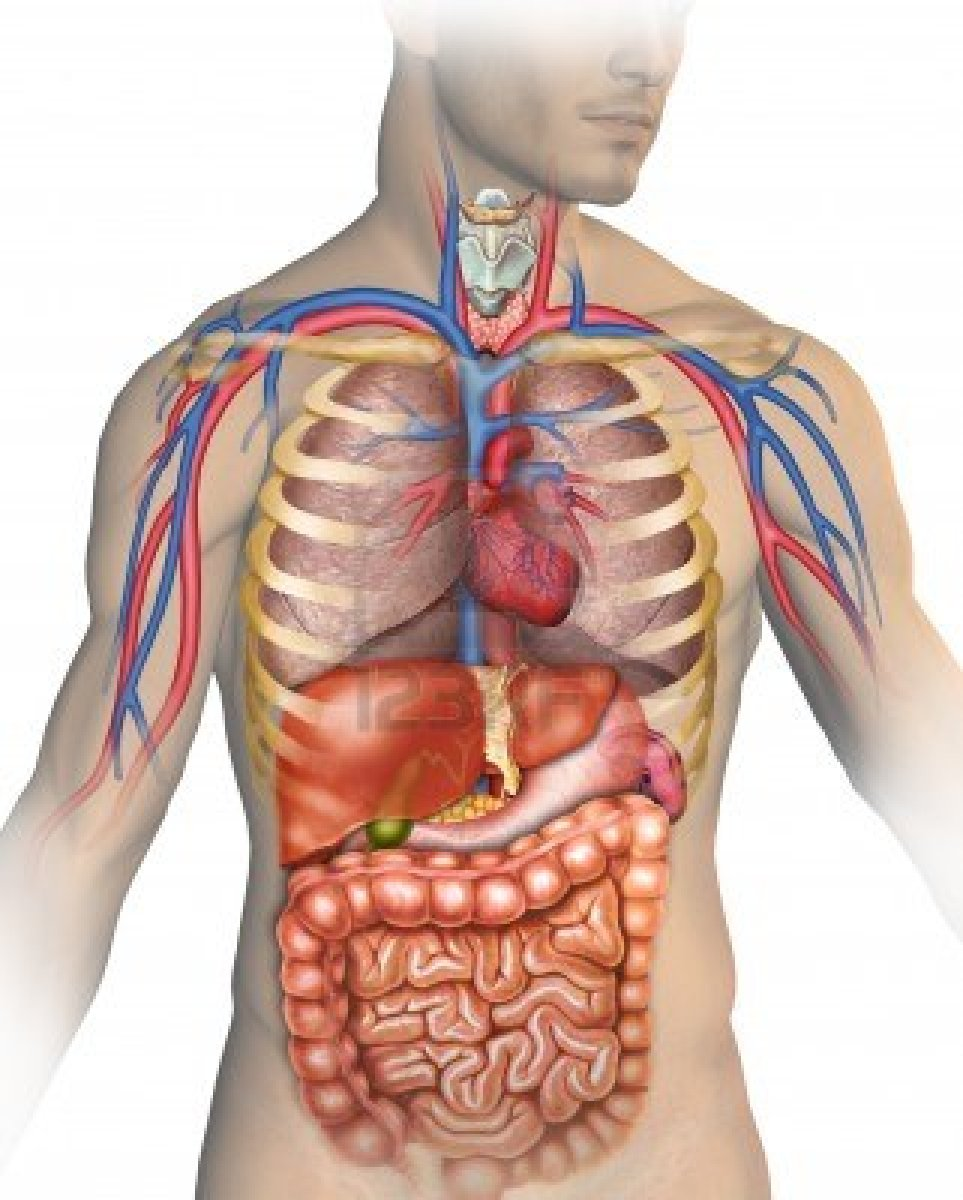 Your Body is The Best Doctor - For Fum And Interesting Articles | Feafum