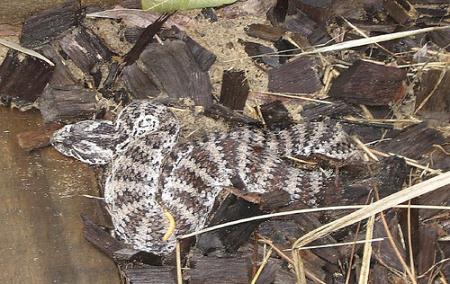 foto ular berbisa - gambar binatang