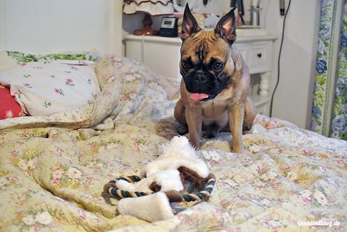 Hundespielzeug Fuchs