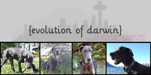 {evolution of darwin}