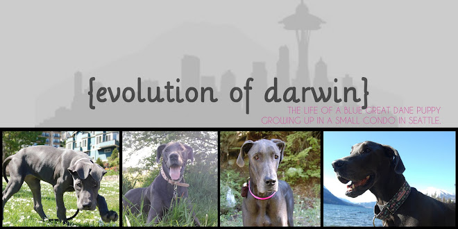 {evolution of darwin}
