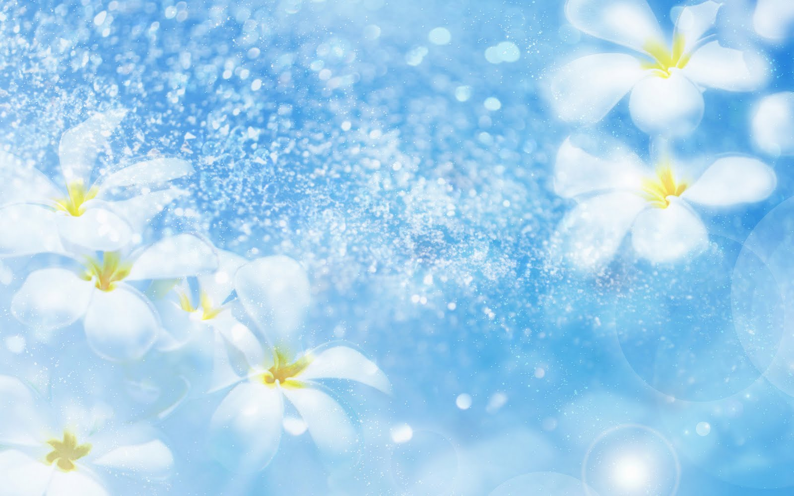Most Beautiful Flower Wallpapers sky blue wallpaper animated flower in the