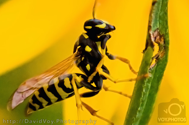 http://davidvoy.photography/nature/insects/#photo=0ac4a58d045a4336ebfc43bf4bf32323
