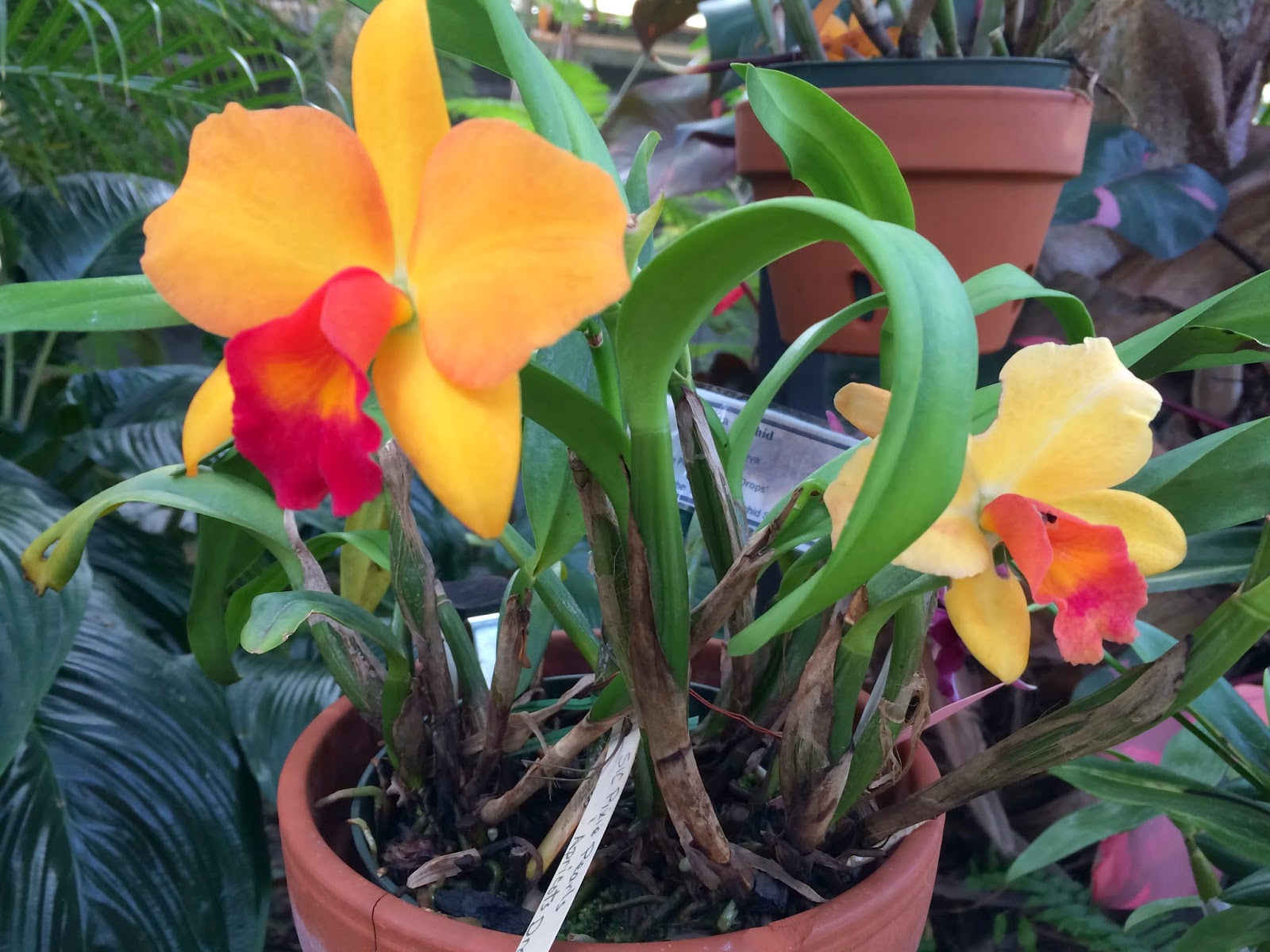 how to keep orchids alive after they bloom