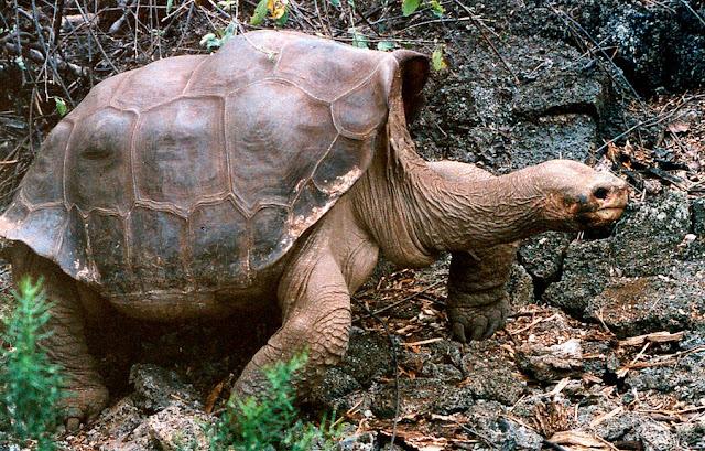 Imágenes y fotografias de animales curiosas e impactantes