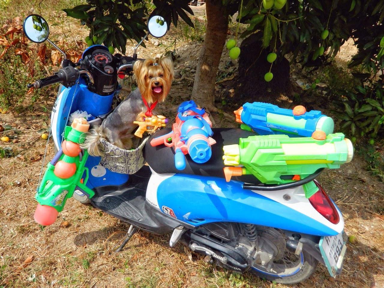 Маленькая собака в корзинке скутера
