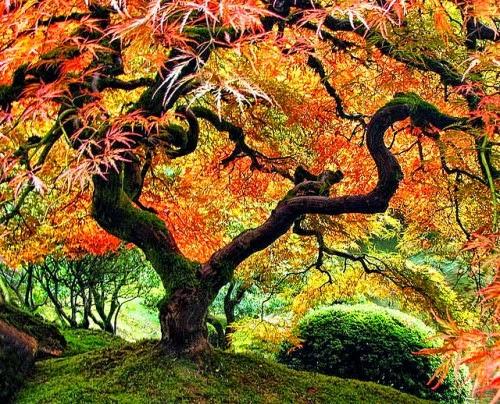 Gambar Pohon Indah Wallpaper Pemandangan Alam Cantik