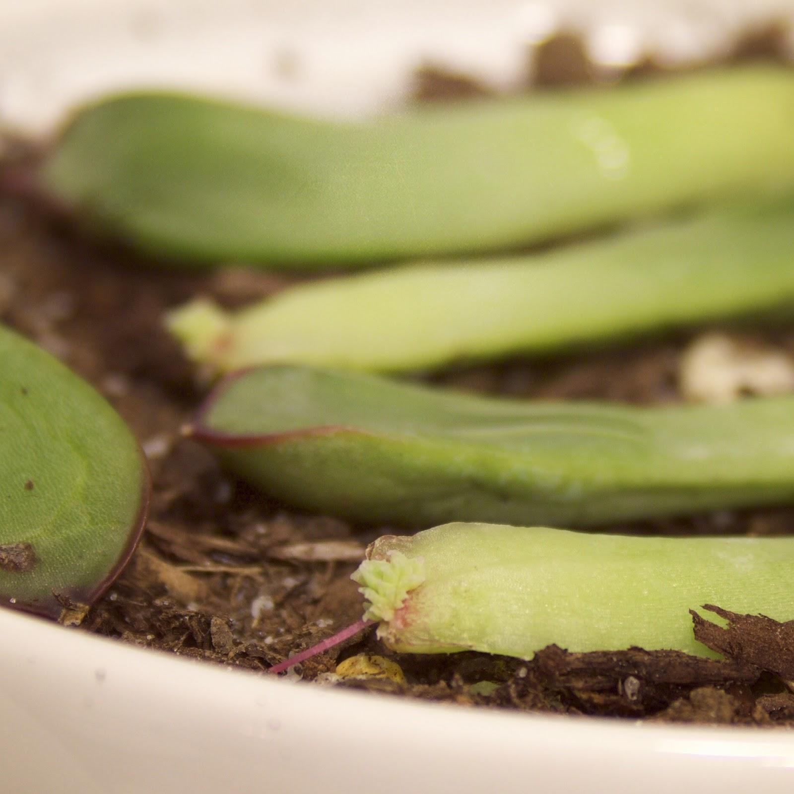 close up succulent photo