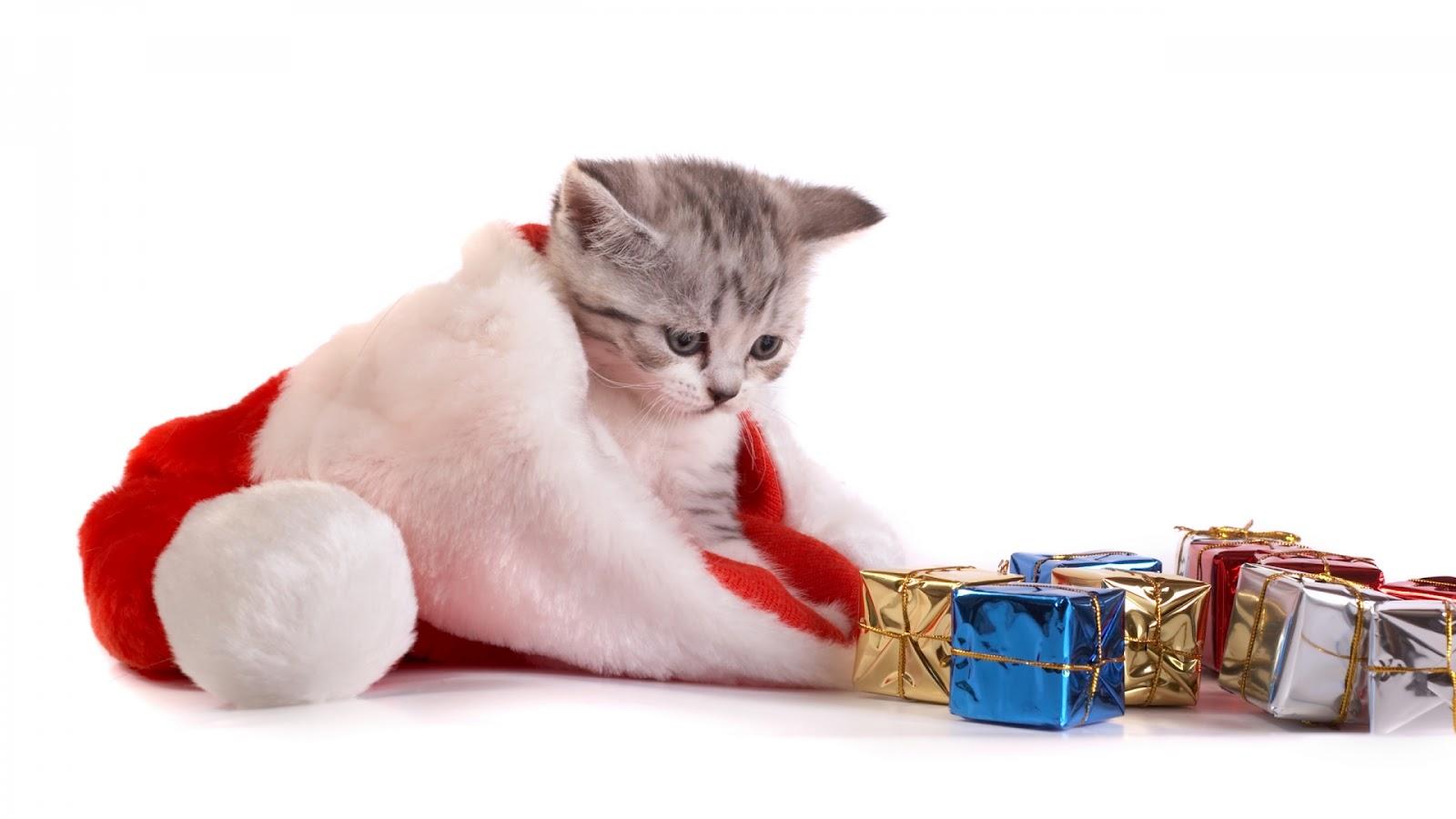 http://3.bp.blogspot.com/-W3B2W5ue6SM/UBvmqHTouUI/AAAAAAAAJlU/GjyFcFlOHmc/s1600/Christmas+Animal+wallpapers.jpg