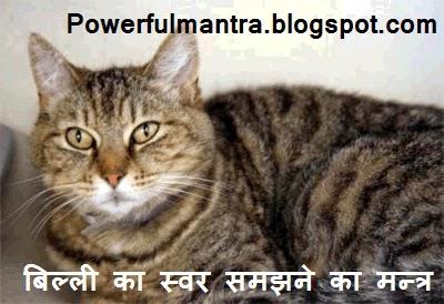 Understand Language of Cat by Mantra | बिल्ली का स्वर समझने का मन्त्र | Billi Ki Bhasha Samajhne Ka Mantra