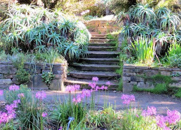 A Guide To Northeastern Gardening San Francisco Botanical Garden