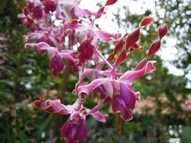 national orchid garden