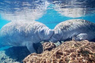 Foto Singa Laut Mesra