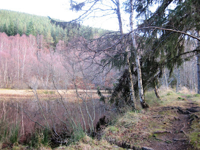 Deeside walks: walk past the ponds on Pannanich Hill.
