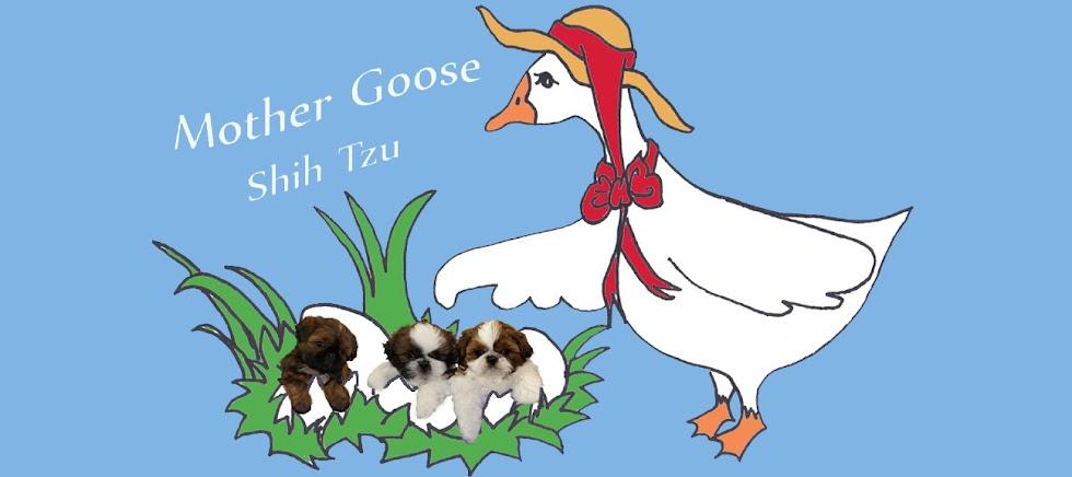 Mother Goose Shih Tzu