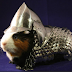 Guinea Pig Armor Now Available