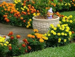 Canteiros Floridos de Verão