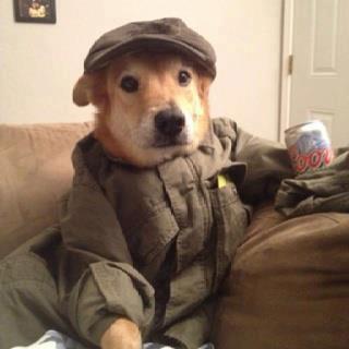 صورة مضحكة لكلب يشرب كانز ولابس بدلة عم سيريانوسى
