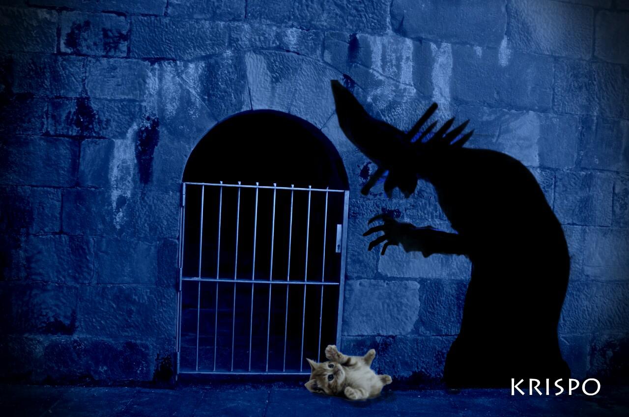 sombra o silueta de bruja atrapando un gato por la noche