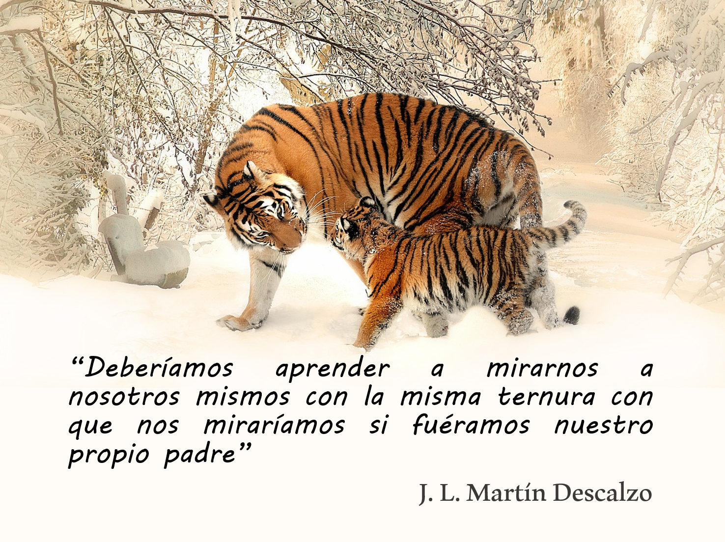 leones imagen: