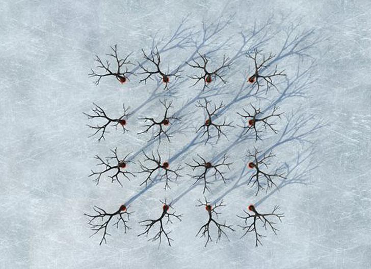 ... Medio Ambiente: Un bosque de árboles secos sobre un río congelado