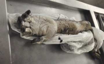 Foto do corpo esquartejado de Marcos Matsunaga