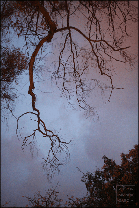 naturaleza a la luz de las farolas
