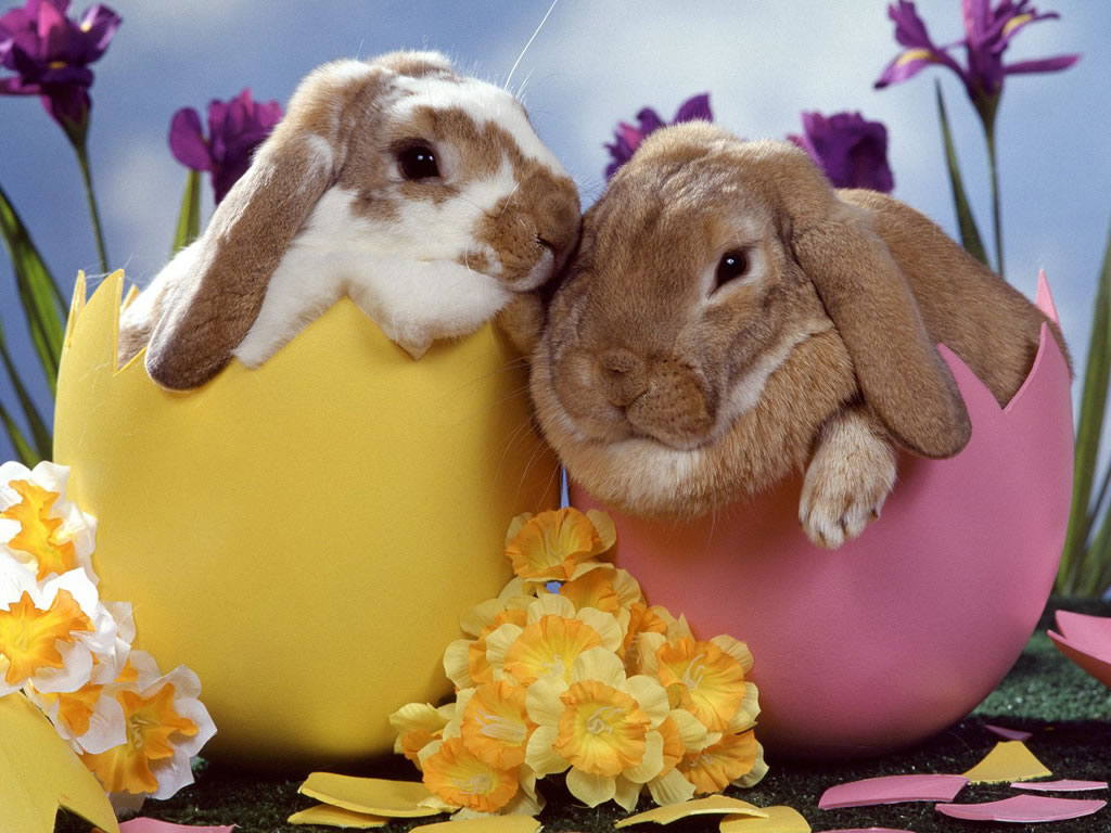 Happy easter rabbits 