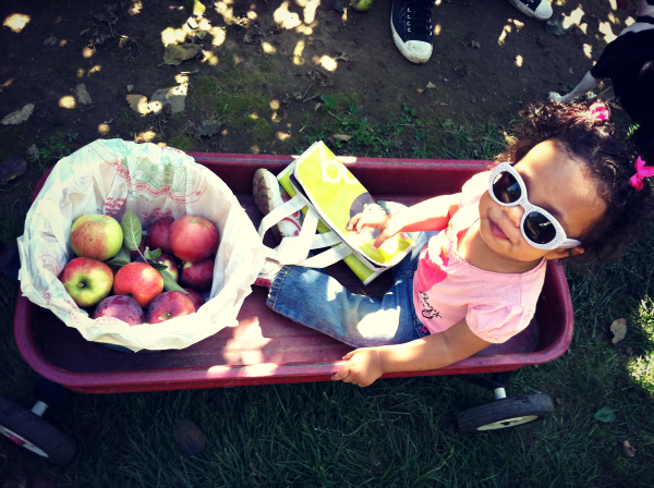 fall apple picking