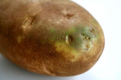 احذر الخضار الموجود البطاطس