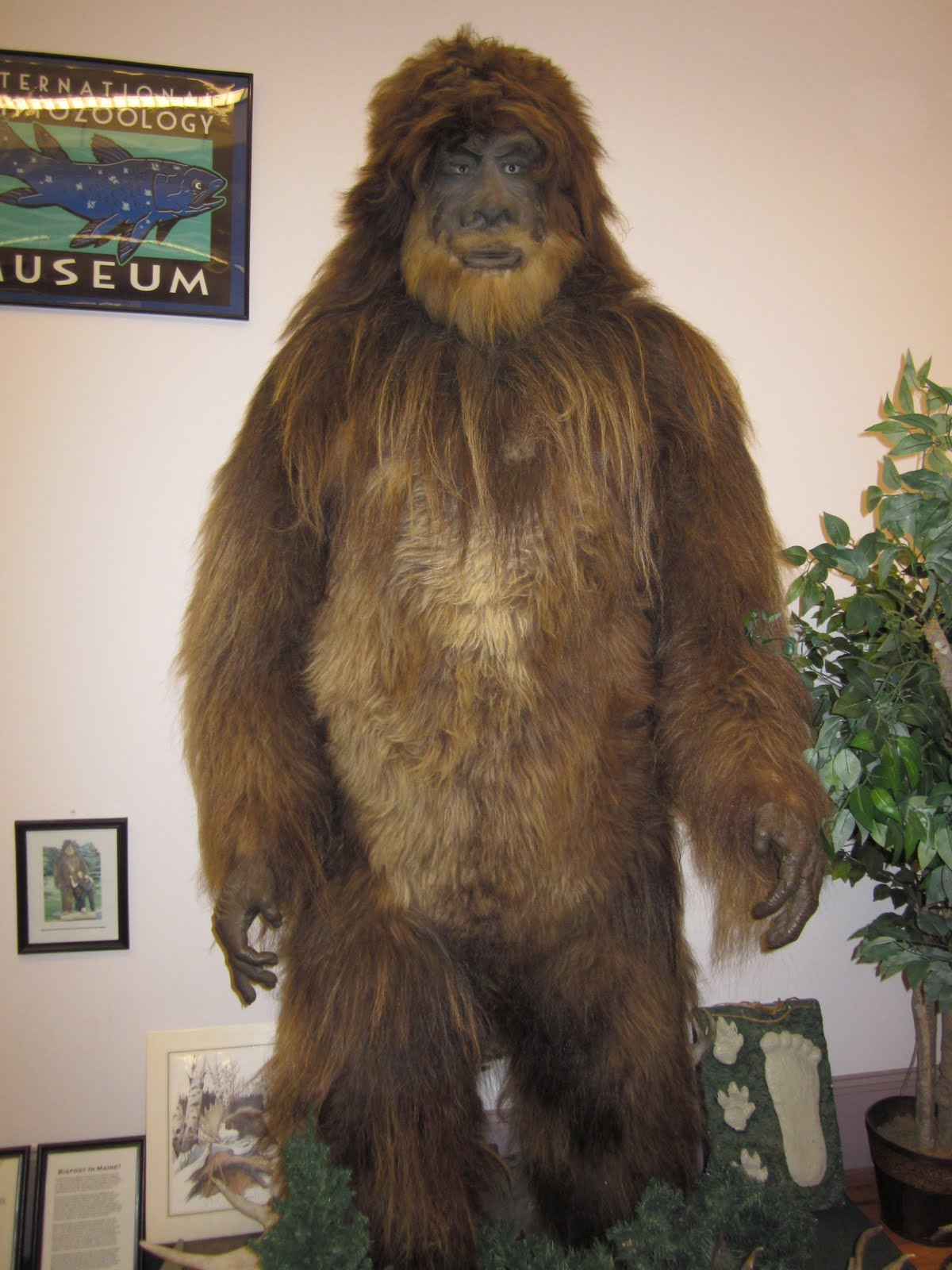 Toddler Bigfoot Costume Images - Reverse Search